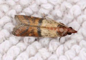 Fabric Pest
